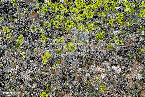Nature background. Moss, fungus on stone closeup . Relief and texture of stone with patterns and moss. Stone natural background. Stone with Moss. Stones boulders covered with moss and fungus.