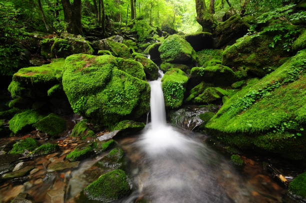VD700 Moss gegok 강원도 습지 이끼게곡의 물흐름 spring flowing water stock pictures, royalty-free photos & images