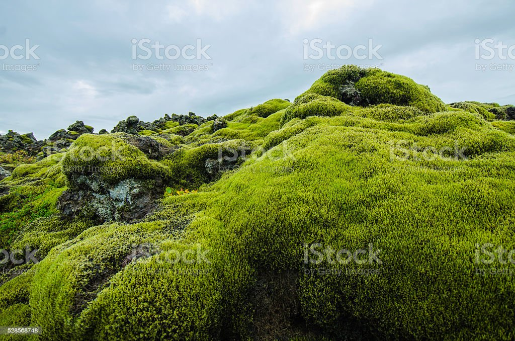 moss grass stock photo