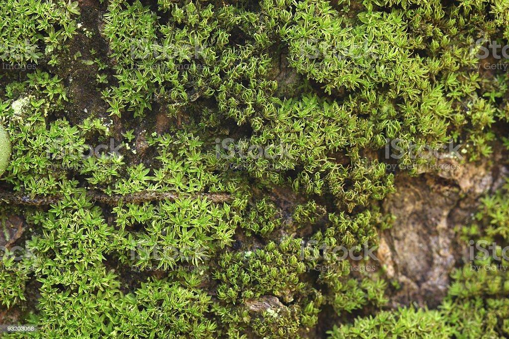 Moss grow on tree stock photo