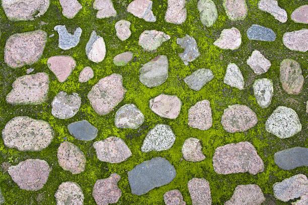 Moss growing between cobblestones stock photo