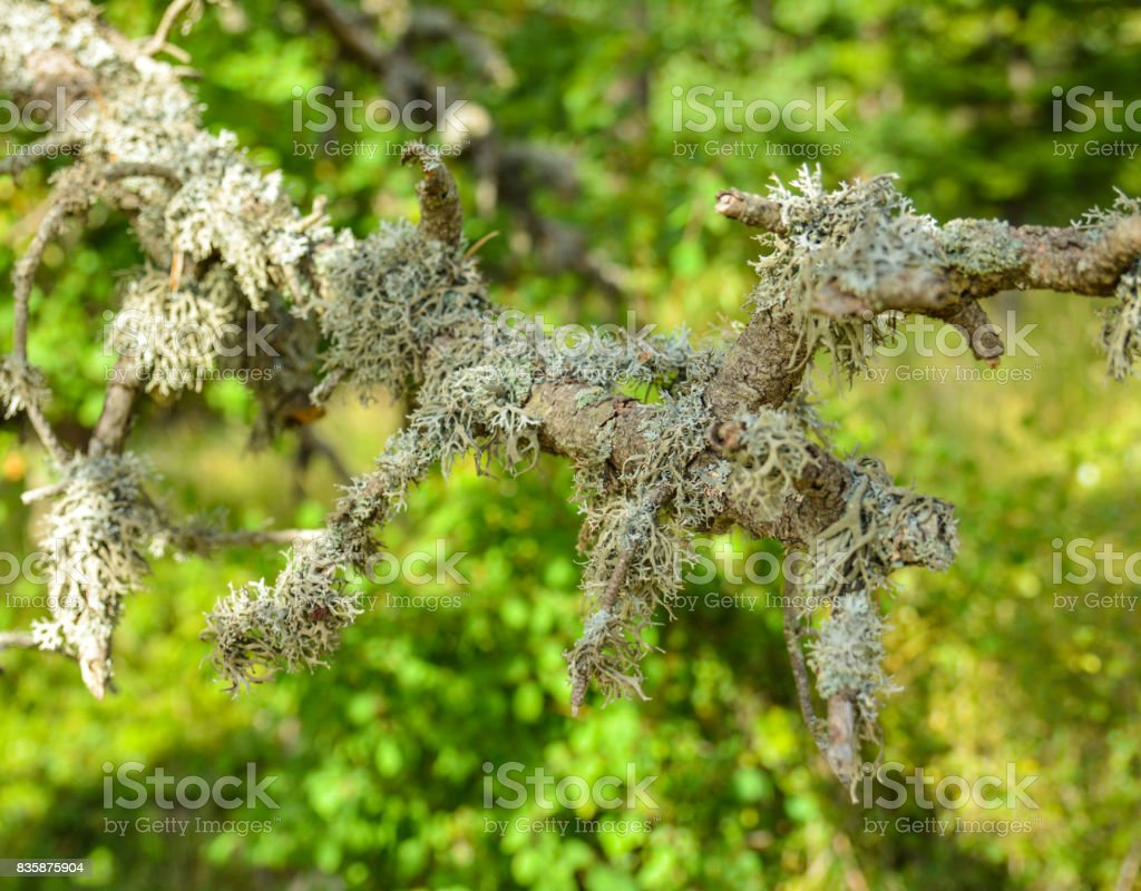 Moss growing on a tree in a forest stock photo