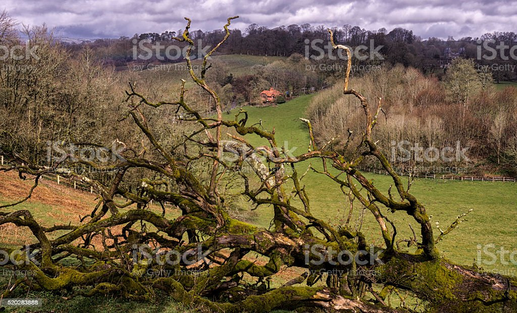 Moss growing on fallen tree in countryside stock photo