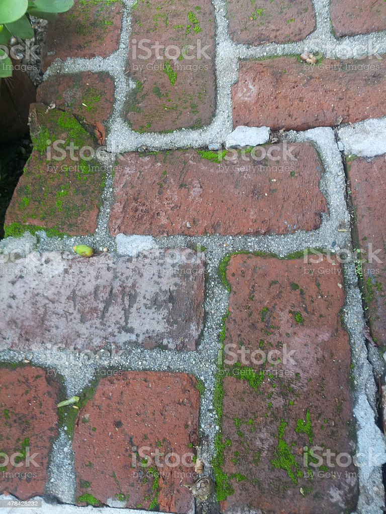 Moss growing on old bricks stock photo
