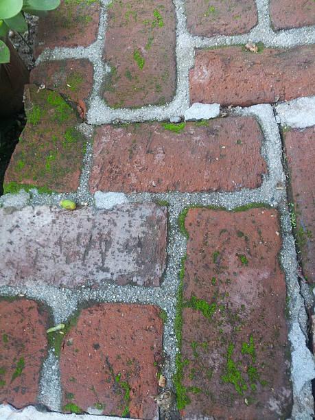 Moss growing on old bricks stock photo