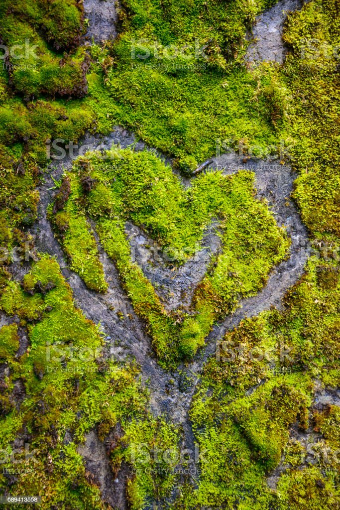 Moss Heart at Cape Disappointment State Park stock photo