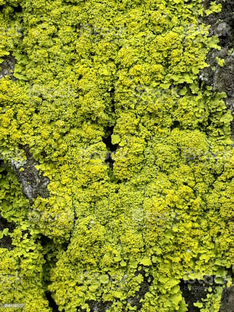 Moss in a tree stock photo