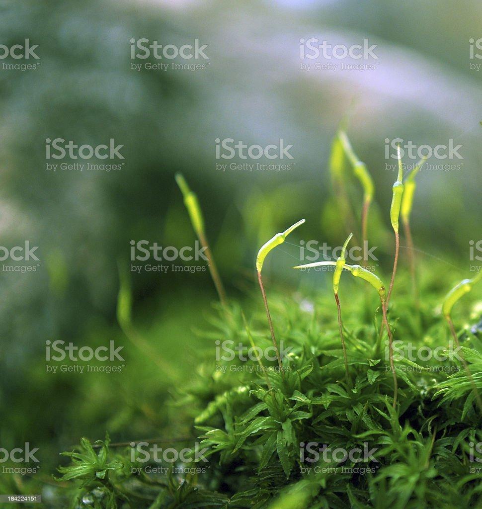 Moss in the spotlight stock photo