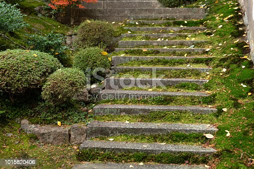 moss ladder old wet moist stone stairway in the forest temple