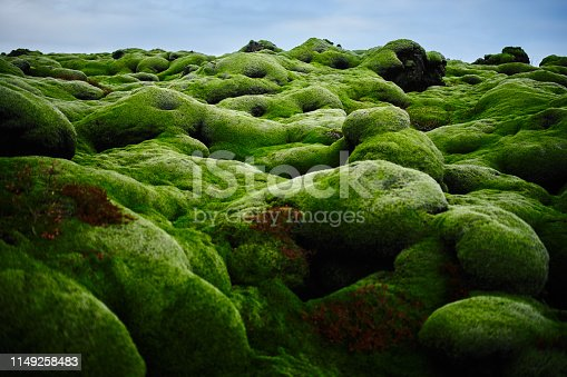 horizontal abstract shot of green moss land in Iceland.no people.