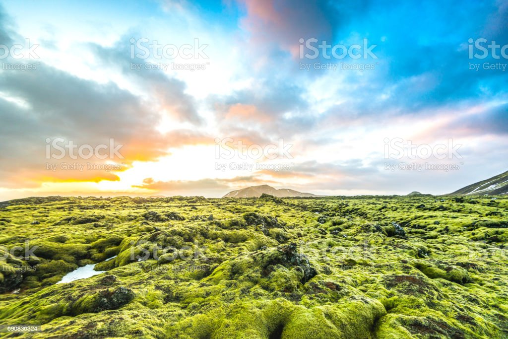 Moss landscape in Iceland royalty-free stock photo
