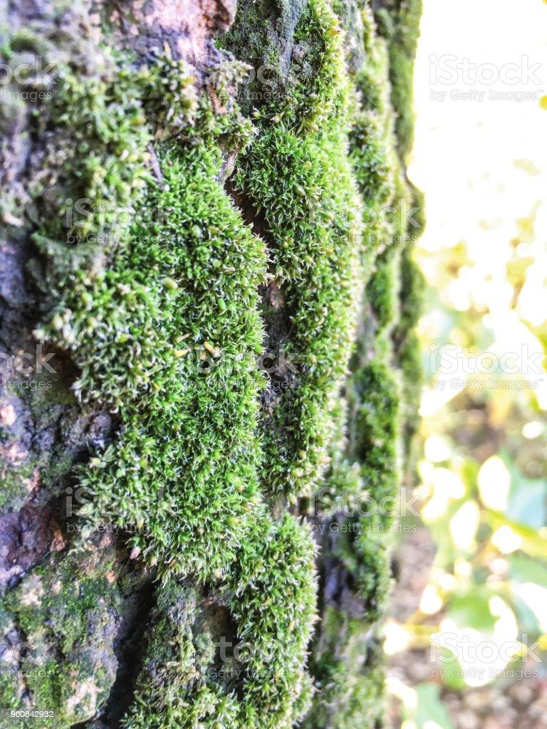 Moss, liken arka plan ünitesi izole stok fotoğrafı