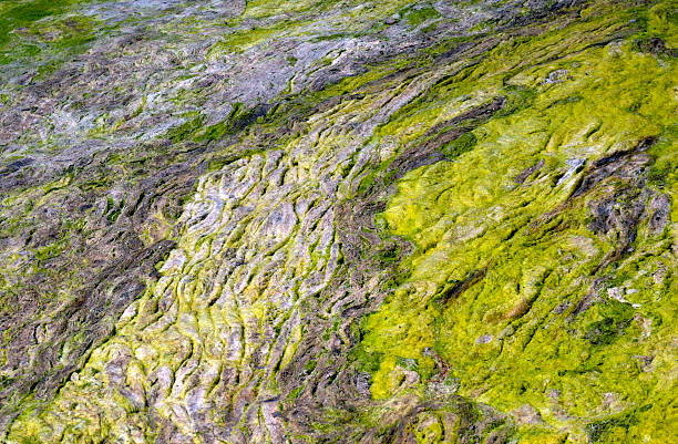 Moss Natural Abstract 1 Moss forming a natural abstract pattern. neilliebert stock pictures, royalty-free photos & images