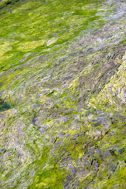 Moss Natural Abstract Moss forming a natural abstract pattern. neilliebert stock pictures, royalty-free photos & images