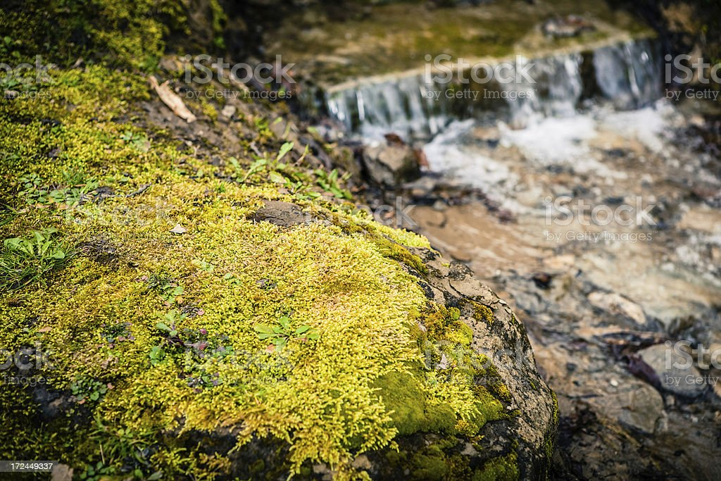 Moss near a Stream, Tuscan Coutryside royalty-free stock photo