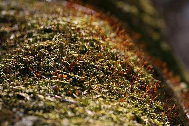 Moss on a log stock photo