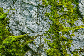 istock Moss on a rock face 1143280620