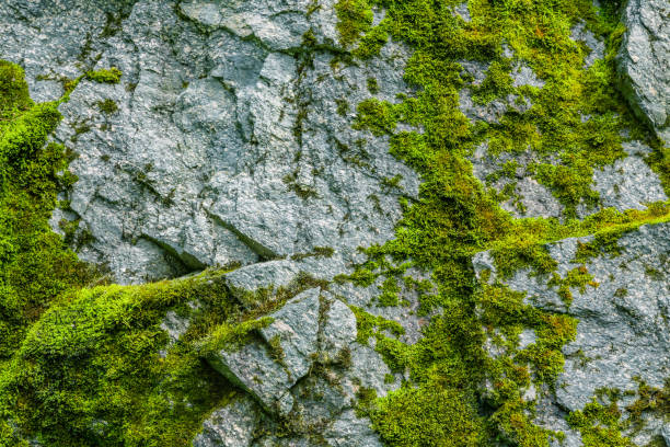 moss on a rock face - moss stock pictures, royalty-free photos & images
