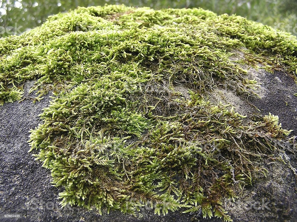 Moss on a rock royalty-free stock photo