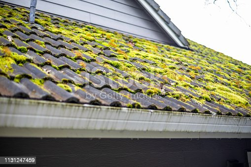 Green moss growing on a roof between the tiles