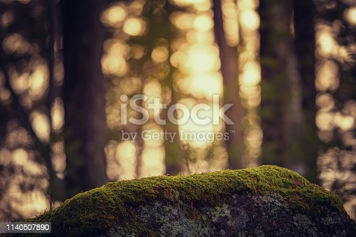 moss on a stone with warm background out of focus