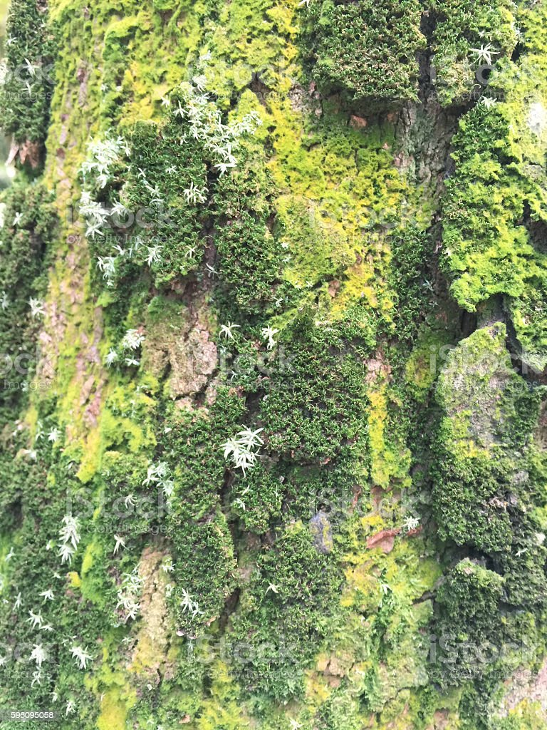 moss on a tree royalty-free stock photo