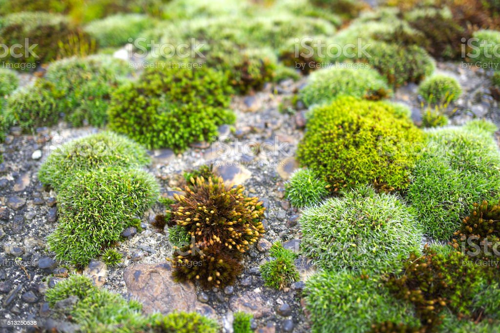 moss on a wall stock photo