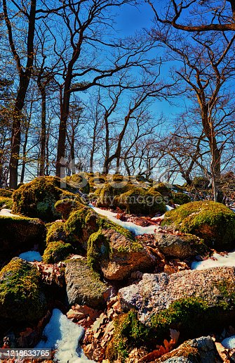 Moss on big stones in the forest with blue sky.