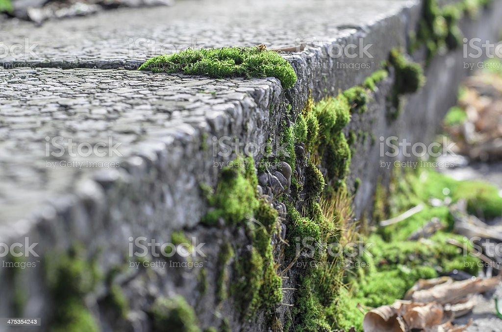 Мох и бетон бетон в морозовске