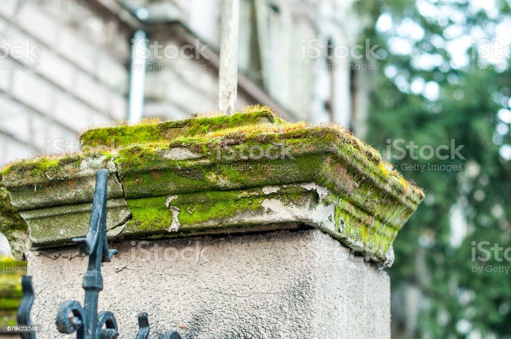 Mousse sur clôture de pilier en béton. photo libre de droits