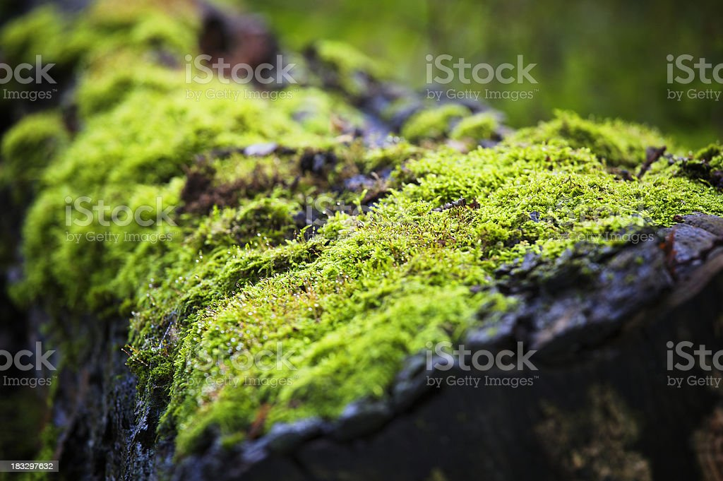 Moss on fallen tree stock photo