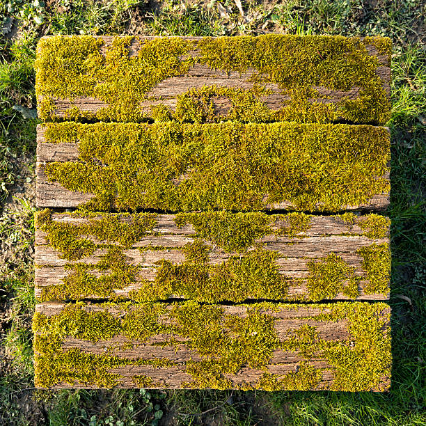 moss on old wooden cube stock photo