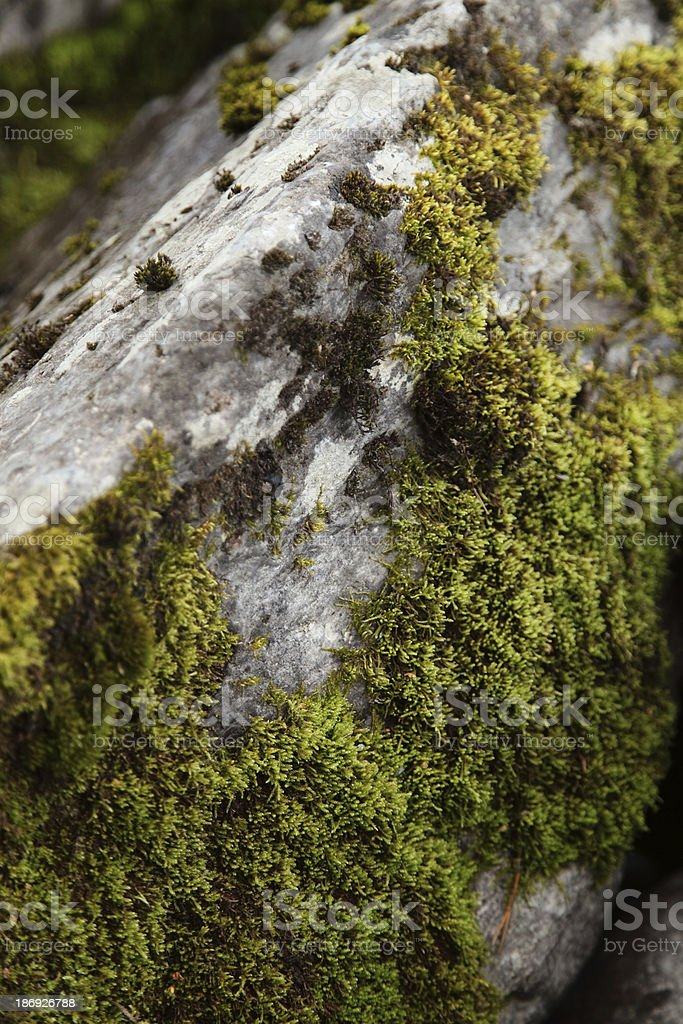 Moss on rocks royalty-free stock photo