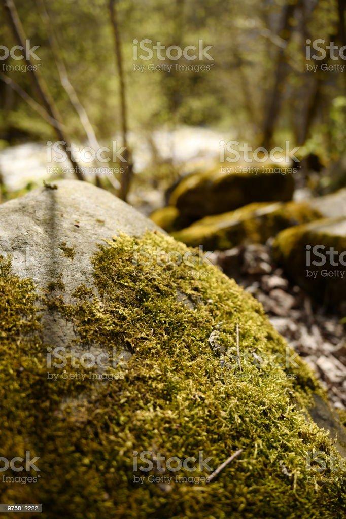 Moss auf rocks - Lizenzfrei Fels Stock-Foto