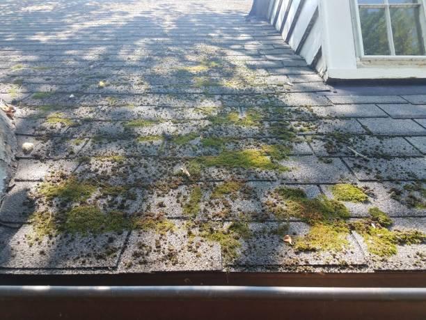 moss on roof shingles stock photo