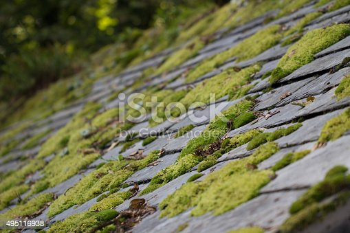 Green moss on slate roof tiles