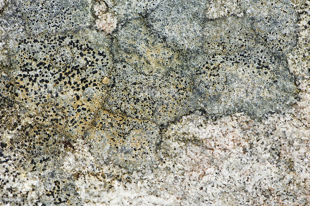 Moss on stone royalty free stockfoto
