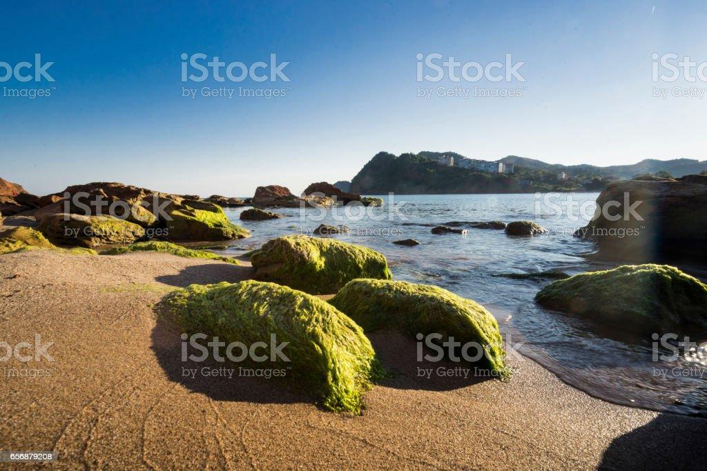 moss on the rock stok fotoğrafı