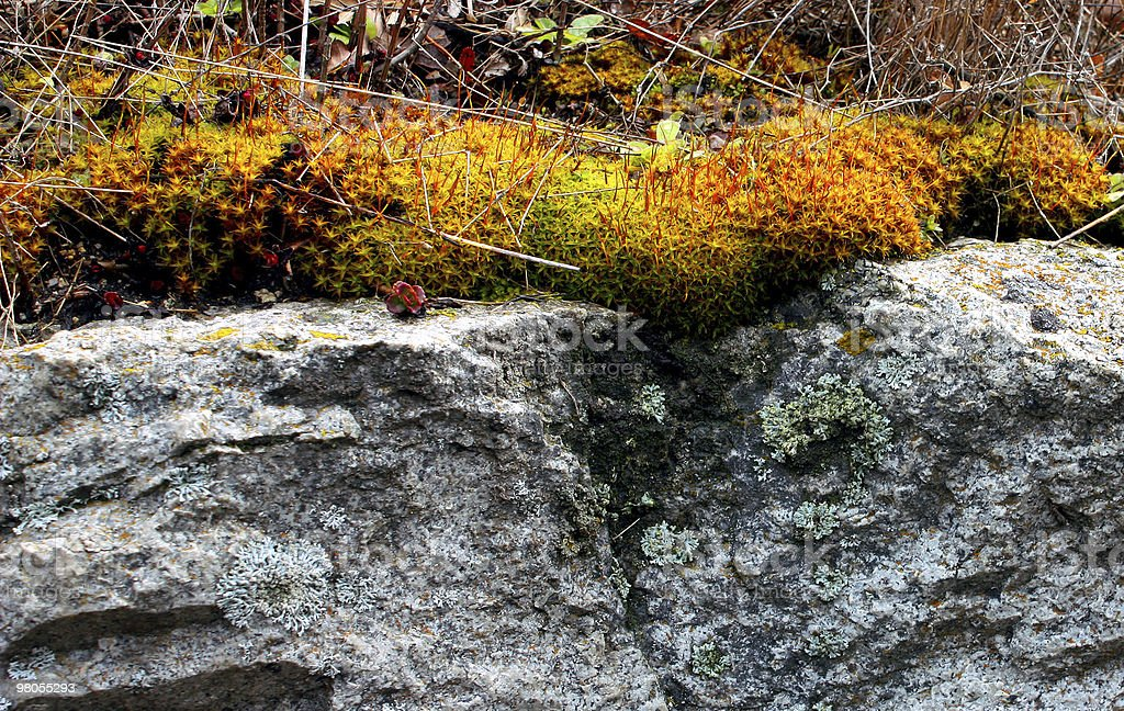 Moss on the rocks. royalty-free stock photo