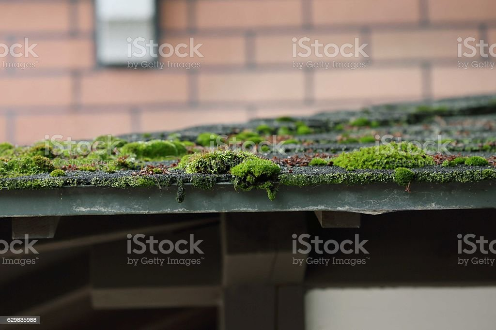Moss on the roof stock photo