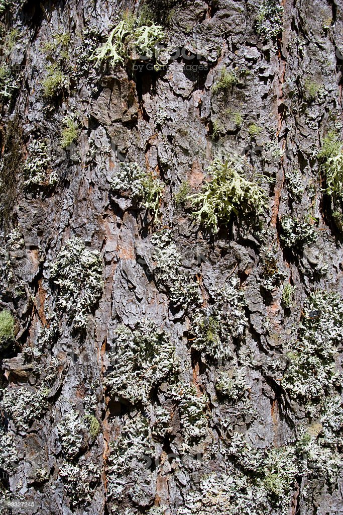 Moss on 나무 나무껍질 royalty-free 스톡 사진