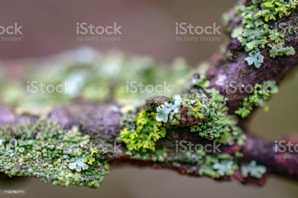 moss on tree branch stock photo