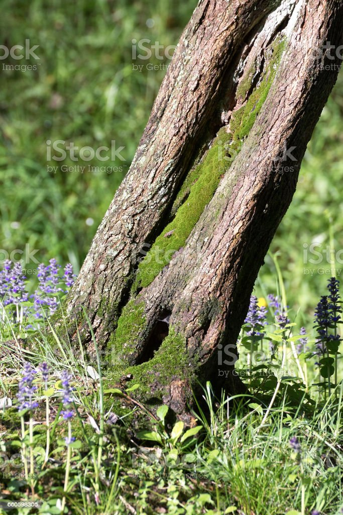 moss on tree royalty-free stock photo