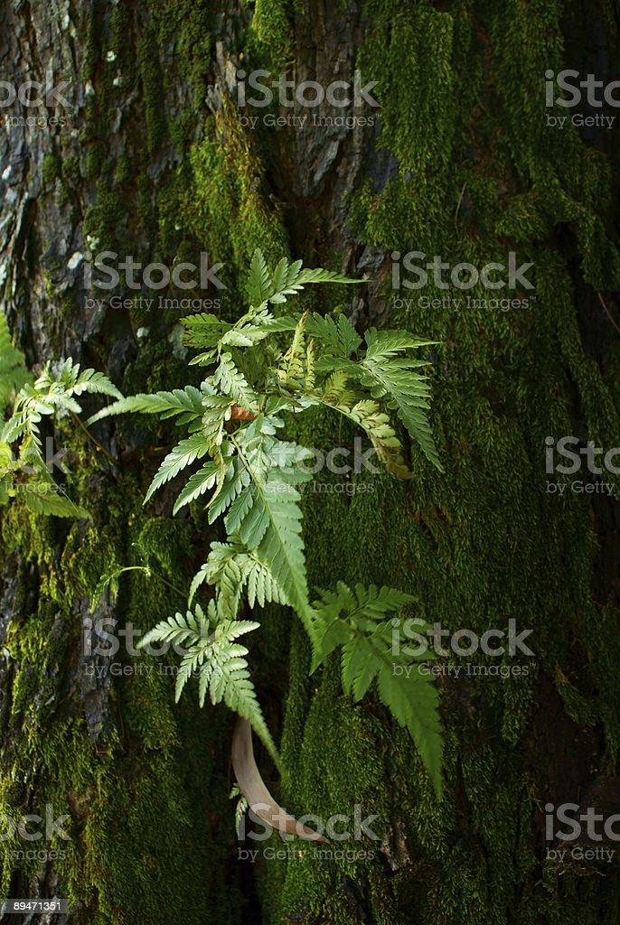 Moss on tree trunk. royalty-free stock photo