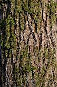 istock Moss on tree trunk texture 1259263537