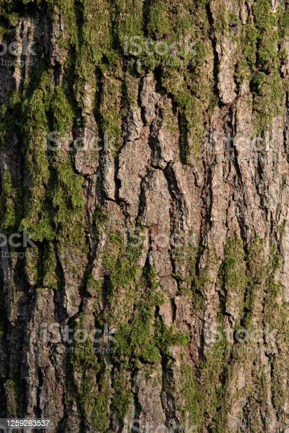 Photo of Moss on tree trunk texture