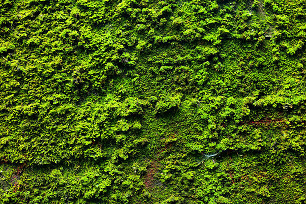 Moss on wall of bunker stock photo