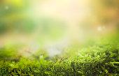 istock Moss 1294687134