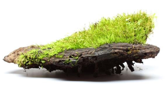 istock moss 175407686
