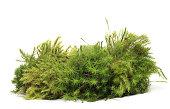 istock moss 184597039